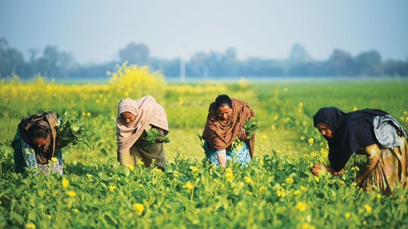 Some lesser known facts about MSP and farm bills that has potential to change India's agriculture sector