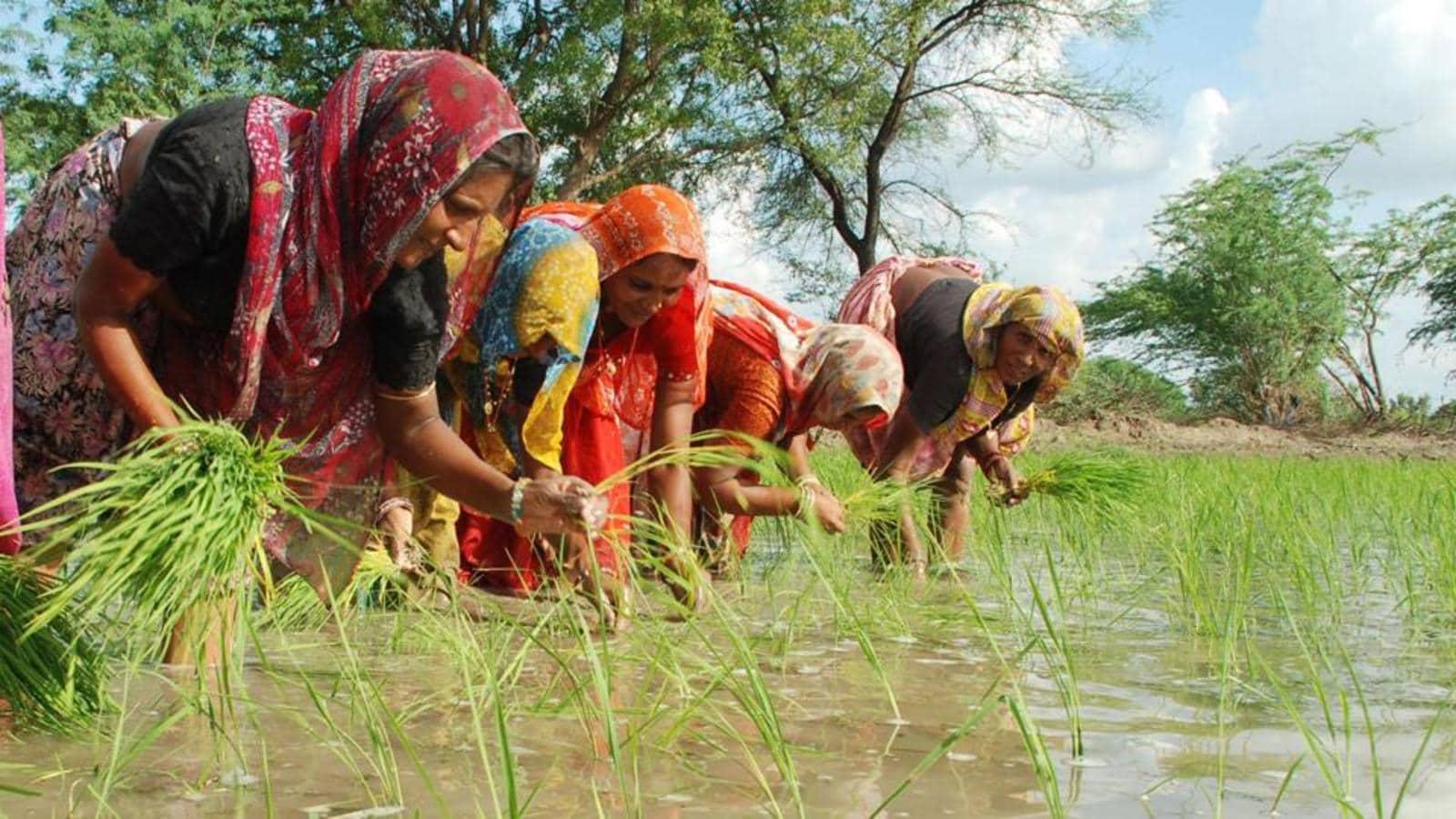 Rains threaten kharif crops, onion prices